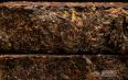 安化黑茶有什么作用?常喝安化黑茶养生保健!