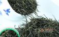 孕妇可以喝毛尖绿茶吗?哪些人喝绿茶需谨慎?