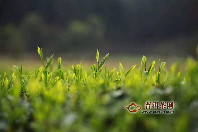 """西湖龙井怎么样?当之无愧的""""绿茶皇后""""!"""
