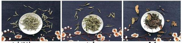 多年的老白茶怎么泡?以五年以上的老白茶为例