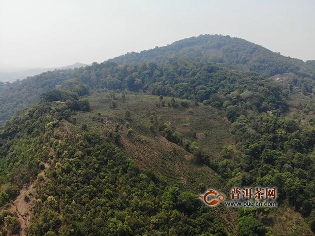 云元谷2019有机年,3000亩有机茶园基地