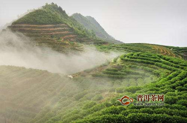 永春佛手茶来源的传说