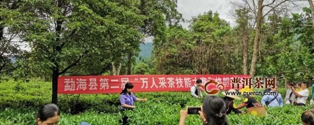 """勐海县第二届""""万人采茶、制茶技能大赛""""格朗和乡站选拔赛开赛"""