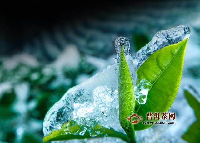 竹叶青是绿茶嘛?属于扁平形炒青绿茶!图片