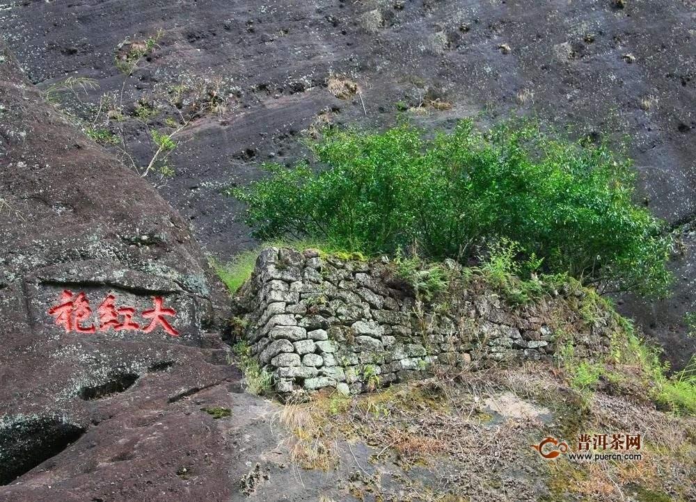 大红袍有几株?真正的武夷山大红袍母树仅6株!