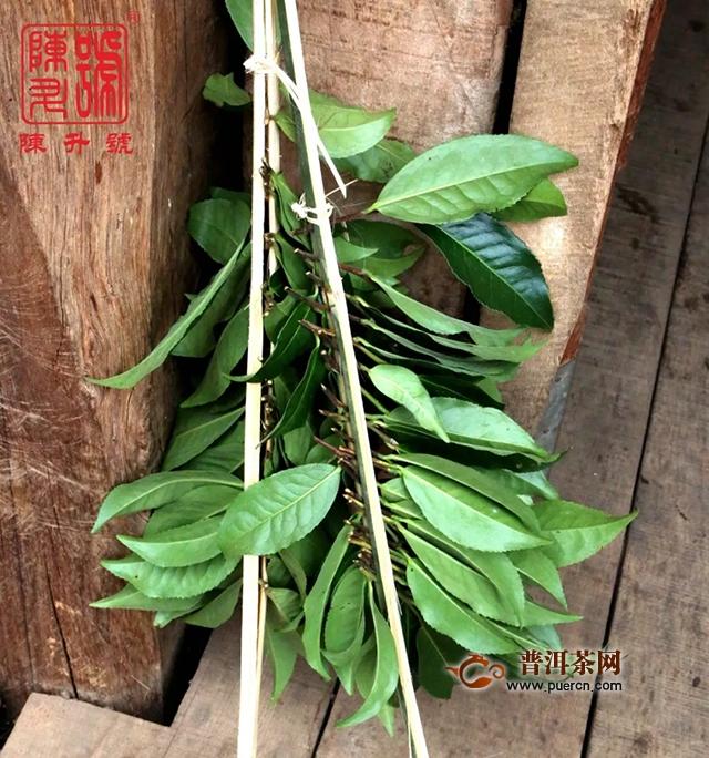 南糯山哈尼族人的特色茶饮烤茶