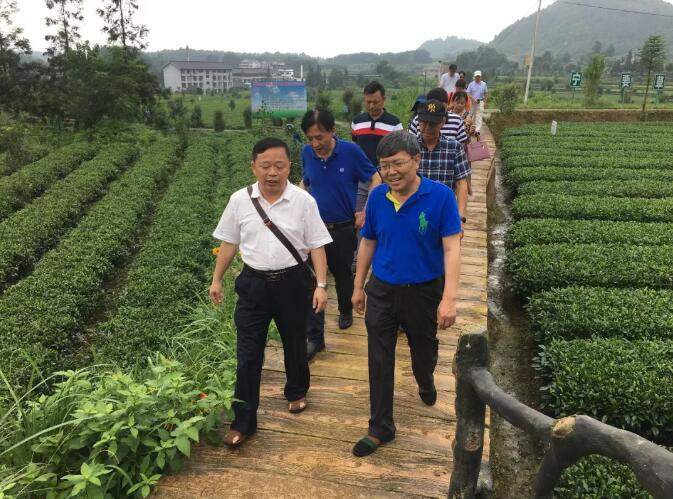 云南省政协组团考察凤冈县茶旅一体化建设