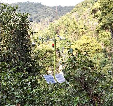 古茶树气候观测体系  全面有效反映茶树生长