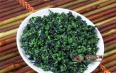 乌龙茶、红茶和绿茶的采摘标准不同