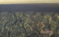 黑茶上的金花是种的吗?简述金花是怎么形成的?