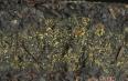 黑茶存放方法,详解黑茶的保存地点、条件、注意事项