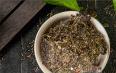 泾阳茯茶黑茶保质期多久?8~10年!