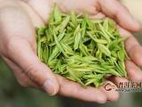 安吉白茶对胃有好处吗?