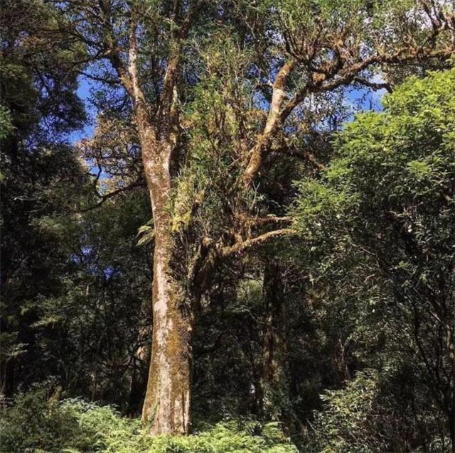 秘境云南:寻找茶的发源地(上)