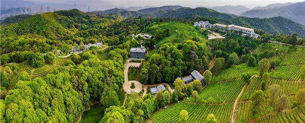 云茶山庄将整合周边的茶园资源 引领云南旅游新风向