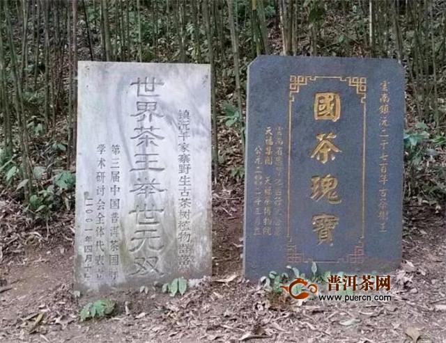 秘境云南:寻找茶的发源地(下)