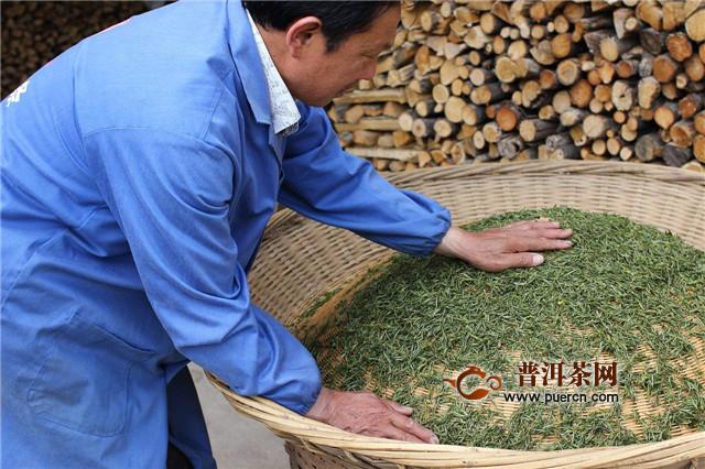 霍山黄芽黄茶工艺,杀青、毛火、等五道工序!