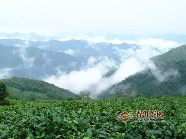 莽枝茶山历史沿革