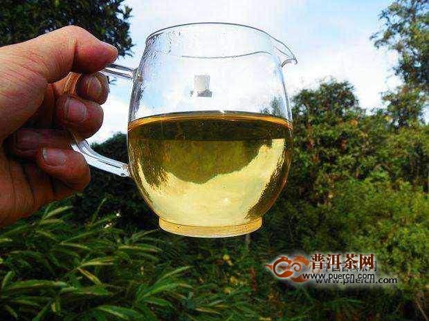 倚邦古树茶怎么泡