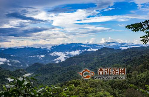 倚邦古茶山的发展历史