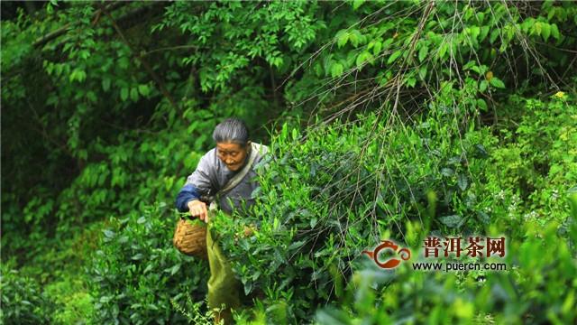 太平猴魁的产地和特点