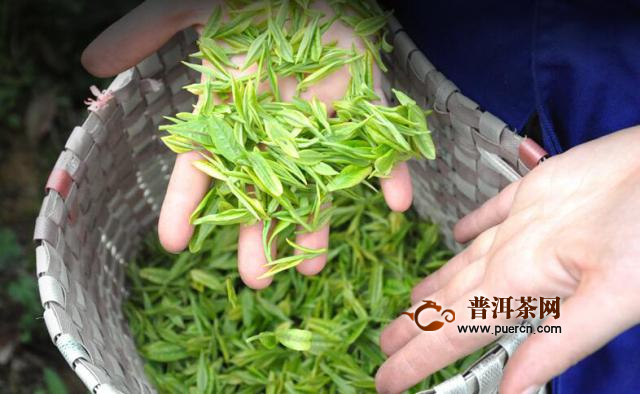 安吉白茶的营养成分,