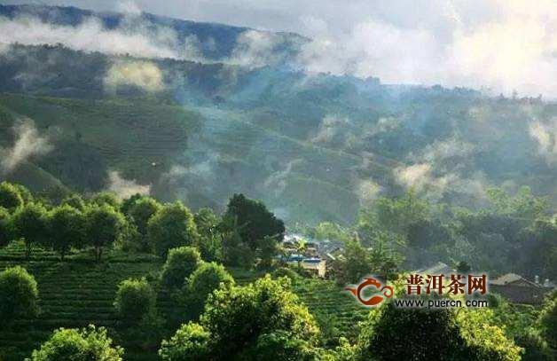 景迈山古树茶历史