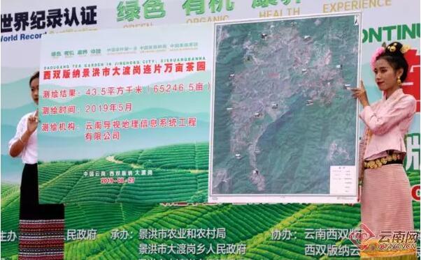 总面积76850亩 年产茶叶6180吨!云南这片茶园被认定为世界最大