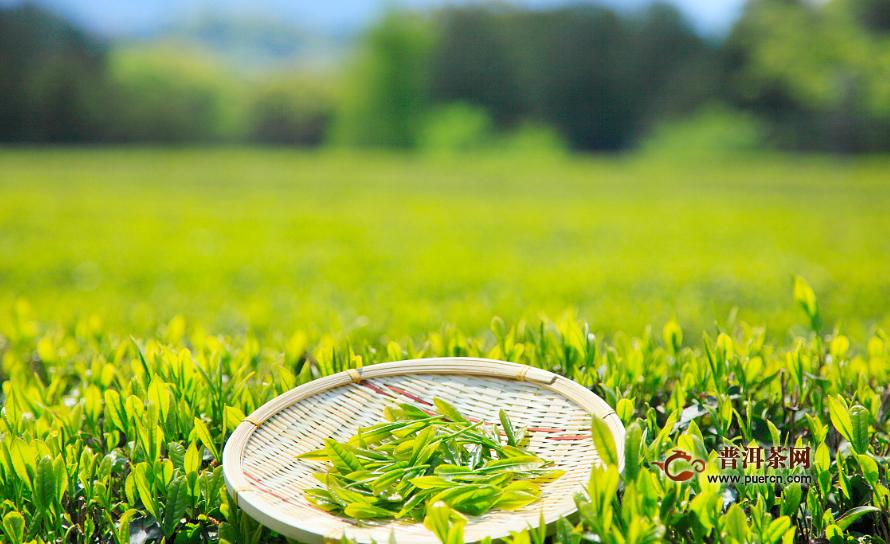 绿茶什么样人不能喝?绿茶适合哪些人喝?