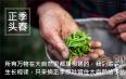 红茶金骏眉和正山小种的原料不同