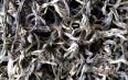 多喝绿茶能降血糖吗?喝绿茶的好处