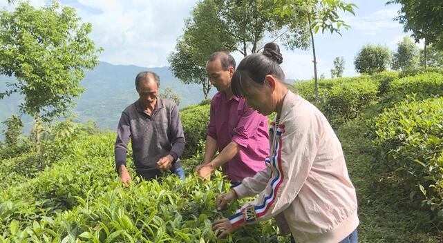 普洱镇沅县者东镇开展茶叶种植技术培训