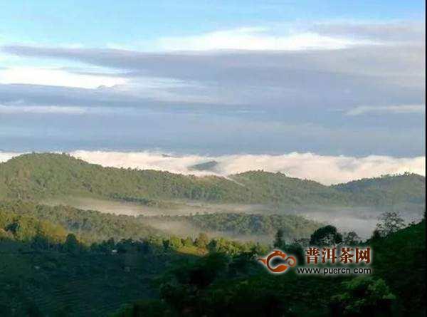 金鼎古茶山