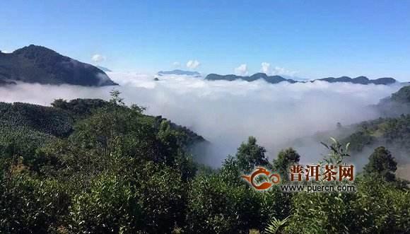 东卡河古茶山