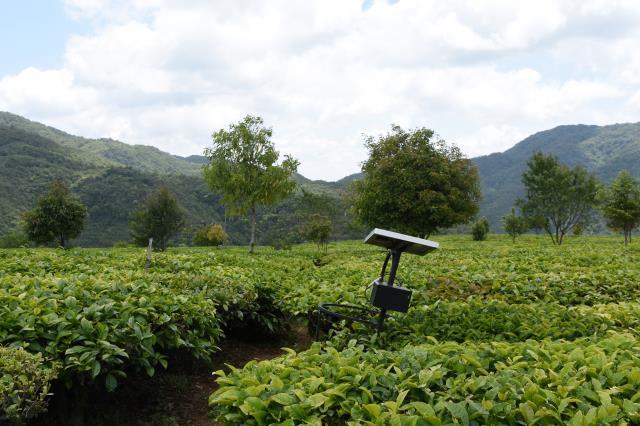 茶产业发展研究报告 贵州茶抽检连续8年合格 印度茶产业危机