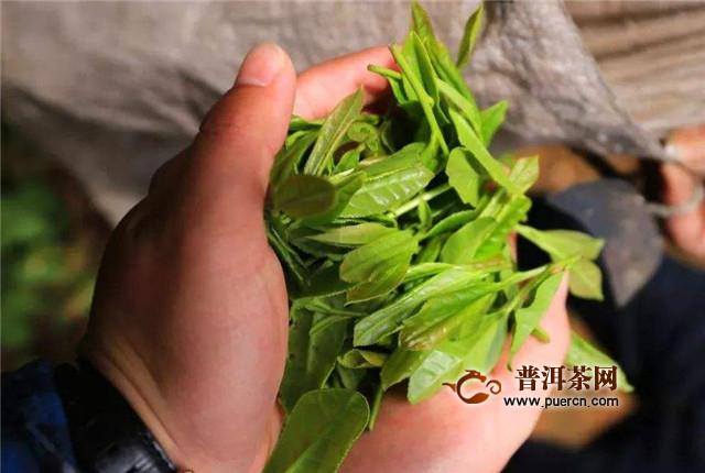 雅安藏茶的制作,分为三个部分!