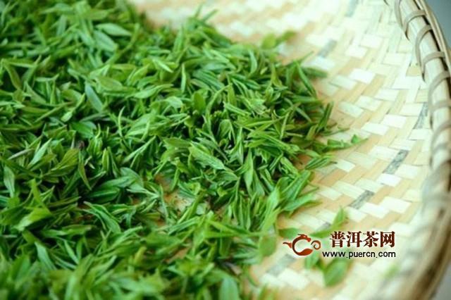 苍南翠龙茶采制工艺