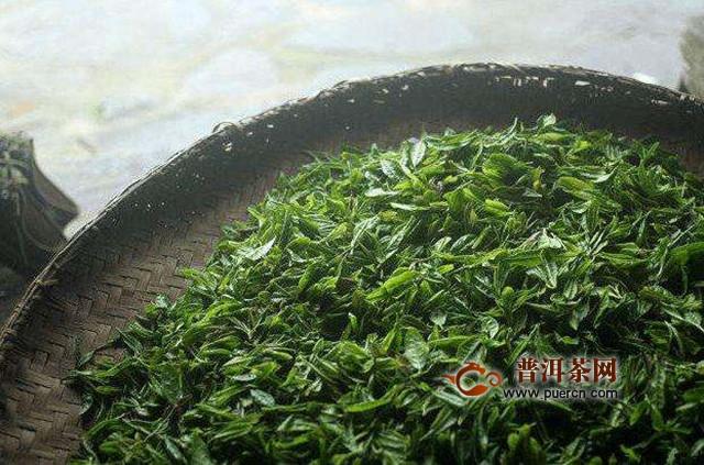 苍南翠龙茶加工工艺流程