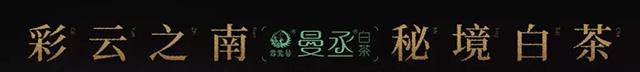 彩云之南·秘境白茶 曼丞·南糯山