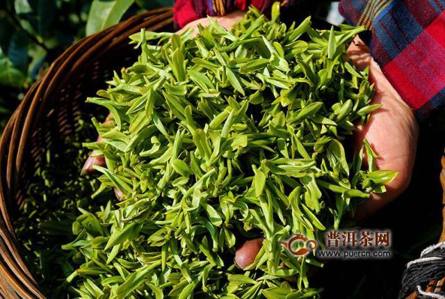 绿茶新茶上市时间,绿茶的采摘方法