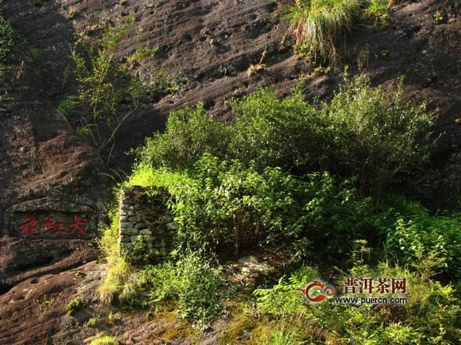 三从六株大红袍母树的价值