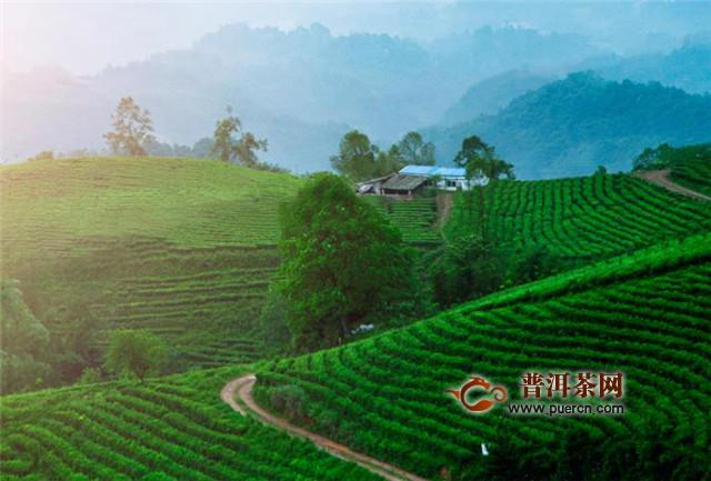藏茶制作工艺,要经过和茶、顺茶、调茶、团茶等工序!