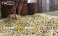福州茉莉花茶制作中的窨制工艺