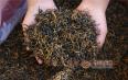 喝红茶和绿茶哪个好?喝茶因人而异