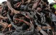 岩茶是红茶还是乌龙茶?红茶和乌龙茶有什么样的区别?