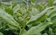 中国十大乌龙茶排行榜,乌龙茶的种类、品牌