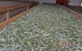 南山绿茶的功效与作用,绿茶的营养成分
