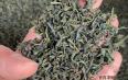 哪些绿茶抗癌功效?各类绿茶的特征简述
