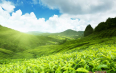 龙井茶和绿茶的区别,绿茶的种类