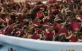 蜂蜜玫瑰花茶孕妇能喝吗?玫瑰花茶适宜人群